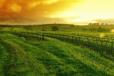 Agricultura ecológica | Agroecología y desarrollo rural