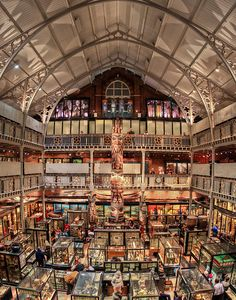 Pitt Rivers Museum in Oxford, England. The museum is a collection of archaeological and anthropological items from Oxford University and is free to visit.