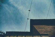 #streetphotography #birds #building 🏫 #street ##colors #streetstyle #sky #bluesky #birdsnest #photography #photography #streetnature #orastie #romania #canon #canoneos #canon1300d