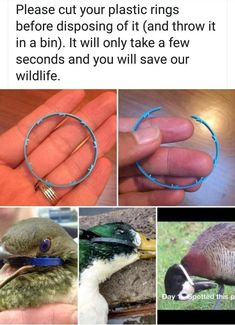Did you know every year over 1 million sea birds are killed by plastic pollution? Spread this message and help save a life! Save Planet Earth, Save Our Earth, Our Planet, Save The Planet, Save Mother Earth, Mother Nature, Faith In Humanity Restored, The More You Know, Global Warming