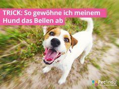 hund_bellt_klaeffender_hund