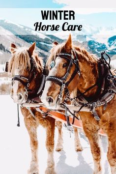 Winter is coming, and although Texas has relatively mild winter temperatures, you will need to make adjustments to the care you provide your horses as the season changes.