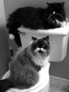 i want that cat! it has a moustache!! lol