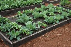 Raised Garden Beds – Growing Cabbage, Garlic, Tomatoes and More - It's better to wait to do gardening until the weather warms up a bit to get all your seeds planted. It won't be too long before your garden is overflowing with yummy vegetables to eat.