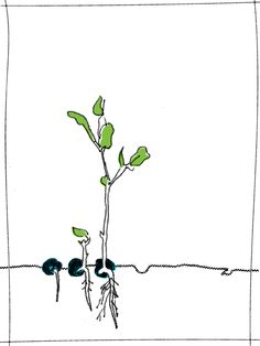 Sprout (illustration by Untuck Design)  #illustration #sprout