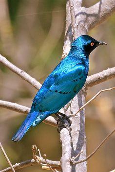 42 Best Blue Bird Images Blue Bird Bird Beautiful Birds
