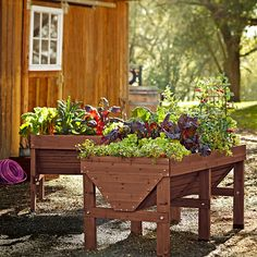 Plant and harvest vegetables at a comfortable height in this sturdy raised planter. The deep V-shaped bed provides a range of soil depths to...