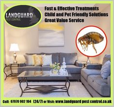 Pest Control, Yorkshire, Pets, Bed Bugs Treatment, Yorkshire Terrier Puppies, Animals And Pets