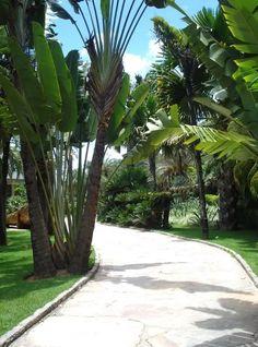 Inhotim - Minas Gerais - Brazil.