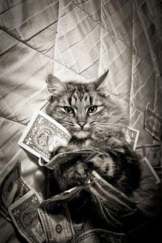 '1% Cat' is a die hard republican