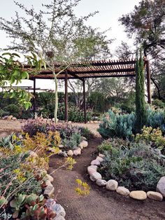 images about Indigenous Karoo garden ideas on