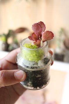 To Make: Mini Terrarium. tiny plants in tiny jars