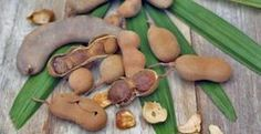 tamarindo-forma-saudavel Health Tips, Health And Wellness, Health Fitness, Home Remedies, Natural Remedies, Fish Recipes, Healthy Recipes, Veggie Delight, Frozen Fruit