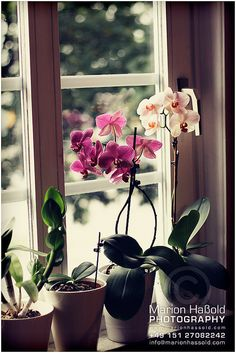 I want to master Orchids and then learn to dye them.