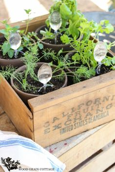 Fruit Crate Herb Garden - The Wood Grain Cottage