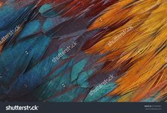 Colorful Feathers, Chicken Feathers Background Texture Imagen de archivo (stock) 357287501 : Shutterstock