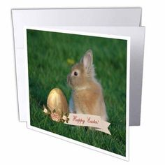 3dRose Bunny Rabbit in the Grass with Easter Egg with Roses, Happy Easter, Greeting Cards, 6 x 6 inches, set of 12