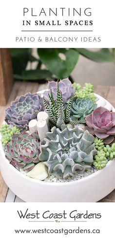 Planting in Small Spaces How to maximize your space on the balcony patio or porch Use tropicals succulents herbs and summer annuals in pots and how to care for them Read. Types Of Succulents, Succulents In Containers, Cacti And Succulents, Planting Succulents, Cactus Plants, Succulent Gardening, Succulent Terrarium, Container Gardening, Gardening Tips
