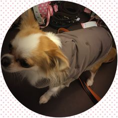 Per il freddo in arrivo ho scelto For Pets Only #minupetshop #treviso