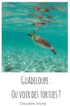 Petite Terre in Guadeloupe: dream cruise and snorkeling! Snorkeling, Bahamas Honeymoon, French West Indies, South America Destinations, Sea And Ocean, Blog Voyage, Future Travel, Beach Trip, Caribbean
