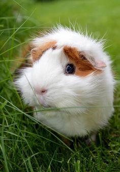 @ambermayao has the guinea pig vibes.