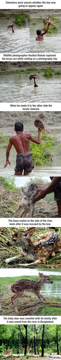 Boy risked his life to save baby deer…