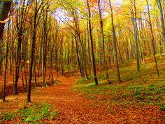 Októberben a Mecsekben (In october in Mecsek) Homeland, Croatia, Southern, October, Country Roads, Community, World, Colors, Beautiful