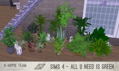 All U Need Is Green – 17 plants  