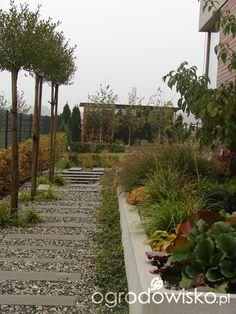 Małymi krokami bo własnymi ręcami... :* - strona 1635 - Forum ogrodnicze - Ogrodowisko
