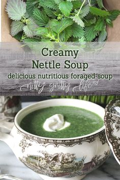 Stinging nettle is a highly valued medicinal and nutritional forage. This delicious creamy nettle soup perfect way to entice a reluctant diner to eat foraged foods! Healthy Soup Recipes, Real Food Recipes, Herb Recipes, Milk Recipes, Cooking Recipes, Herbs For Health, Wild Edibles, Herbal Remedies, Gourmet