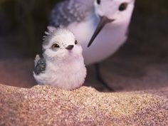 The Star Of Pixar's Newest Short, 'Piper,' May Be Its Cutest Character Yet