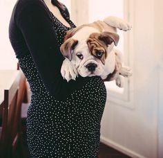 Portrait Photography Inspiration : dog photography  Lempäälä Petra Veikkola Photography  Hä&#