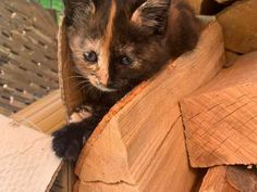 Katzenbabys, Kitten baby, Junge Katzen - Hauskatze, Bauernhofkatze Kitten Baby, Baby Kittens, Cats, Animals, Vet Office, Gatos, Animales, Animaux, Animal