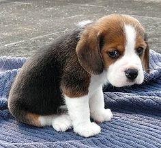 Image from http://kerrvillevetclinic.com/wp-content/uploads/2014/05/sad-puppy.jpg.