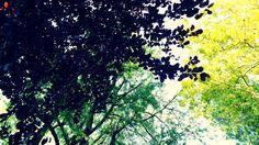 #summer2017 #green #leaves #myphoto