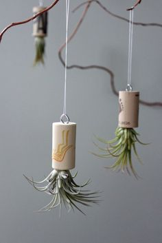 diy-xero-g-hanger_air-plant-holder_tillandsia-hanging-planter_mini-plant-holder_metal-tail_footstep-design_indoor-garden_home-decor-ideas