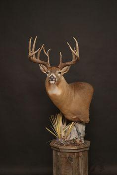 Deer Head Decor, Taxidermy Display, Whitetail Deer Hunting, Deer Mounts, Big Boyz, Wood Burning Patterns, White Tail, Giraffe, Pedestal