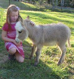 Image result for Dwarf Donkeys