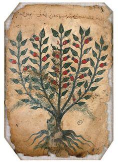 Amadun Plant from the Khawass Al-Ashjar (de Materia Medica), Iran, 13th century CE