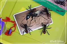 Ant Activities and Ant Nature Journal