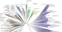 Tree of Life redesigned to reflect thousands of new species   Inhabitat - Green Design, Innovation, Architecture, Green Building