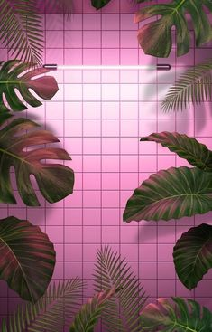 63 ideas wallpaper iphone pink aesthetic for 2019 Tumblr Wallpaper, Grid Wallpaper, Framed Wallpaper, Pink Wallpaper Iphone, Trendy Wallpaper, Pastel Wallpaper, Screen Wallpaper, Cute Wallpapers, Wallpaper Backgrounds