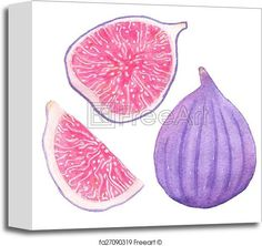 Common figs. Watercolor whole fig, part and slice on the white background, aquarelle. Vector illustration.