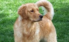 30 Body Signals You Should Know from Your Dog