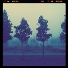 Foggy Trees by John Taylor