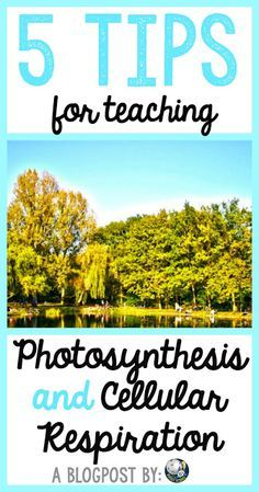 5 ideas for secondary biology teachers to use when teaching photosynthesis and cellular respiration (energy flow as I like to call it!) in their classrooms. Biology Classroom, Biology Teacher, Ap Biology, Teaching Biology, Science Biology, Science Education, Life Science, Forensic Science, Physical Science