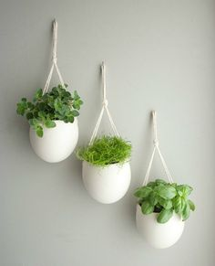 herbs for the kitchen... think I have some pots like this from ikea in the basement somewhere