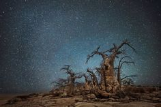 vieu-arbre-etoile-02-1080x720