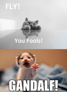 Kittens of lord of the rings, lol