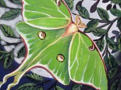 One of my favorites. Luna moths are so beautiful and mysterious. Dj Like, Floaters And Flashes, Moon Moth, Cool Bugs, Abstract Nature, Black Spot, Garden Art, Mother Nature, Cotton Canvas